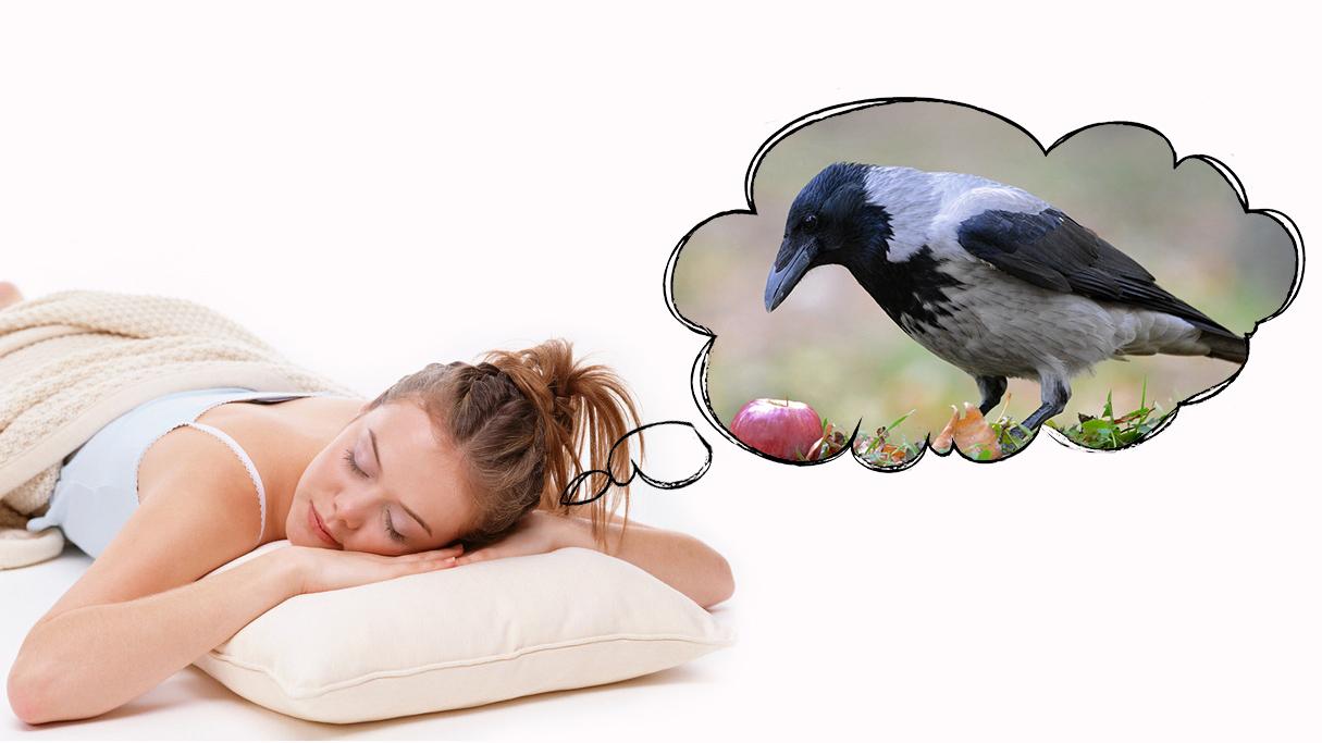 Как толкуют сны о вороне