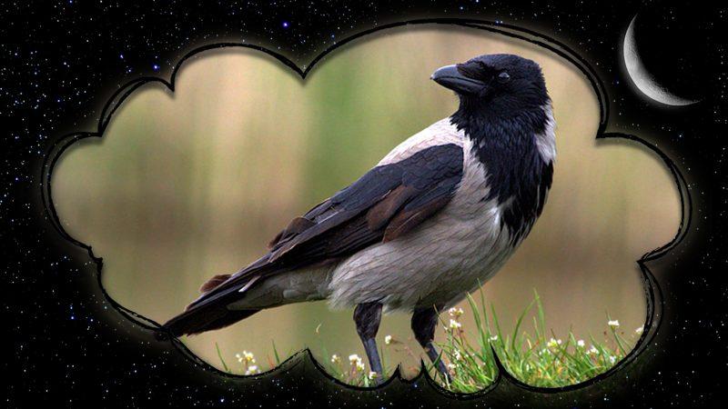 Сонник ворона. К чему снится ворона?