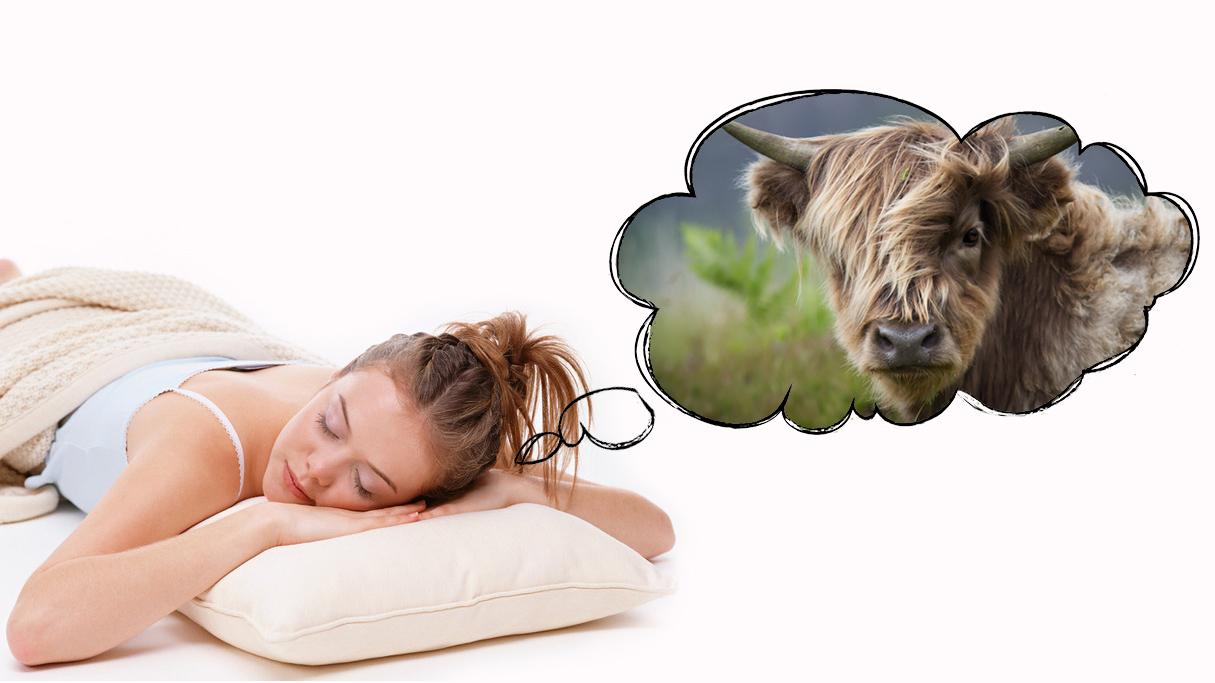 К чему снится бык - разные толкования