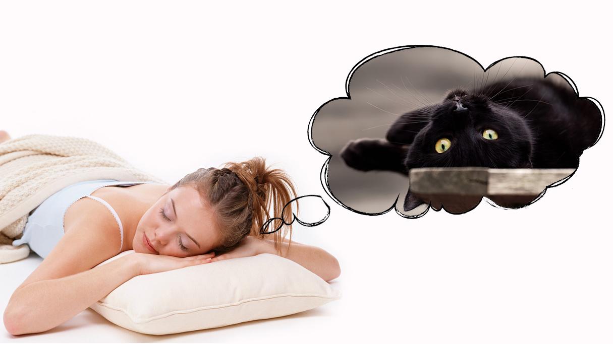Черная кошка приснилась