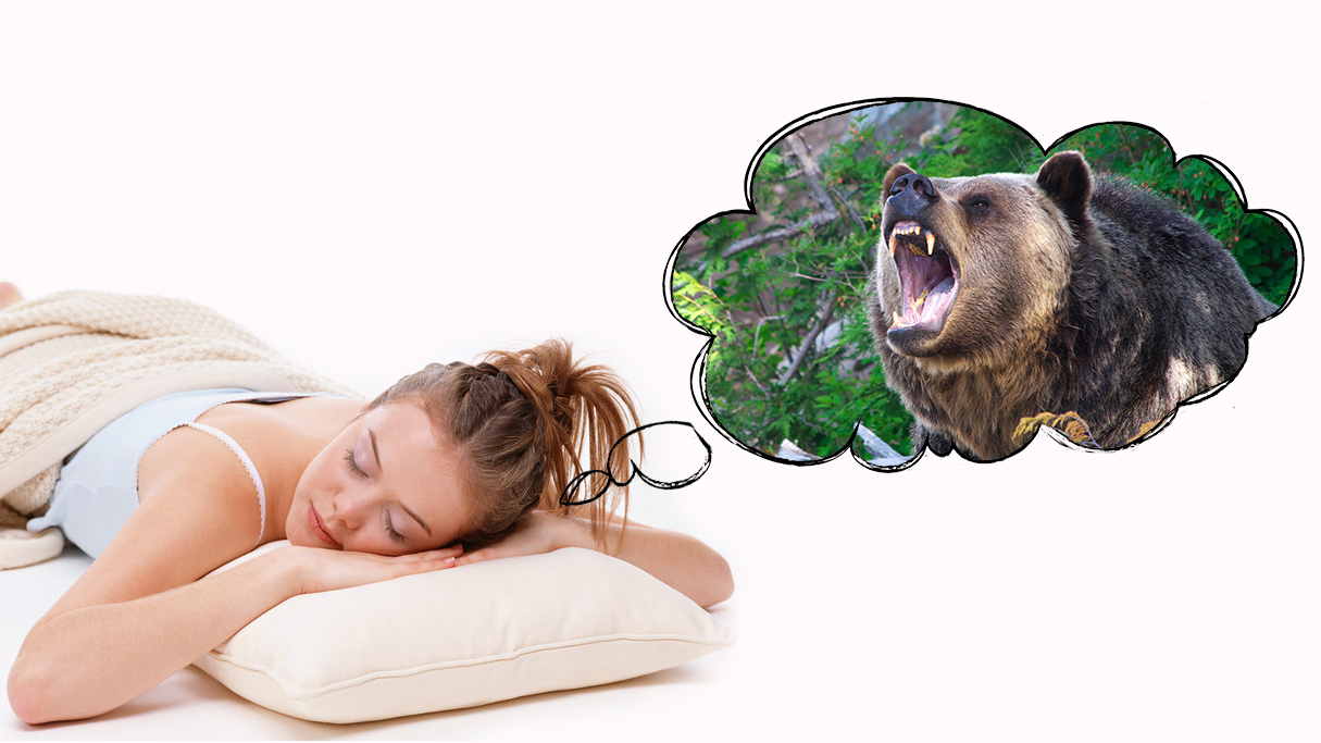 К чему снится нападающий медведь