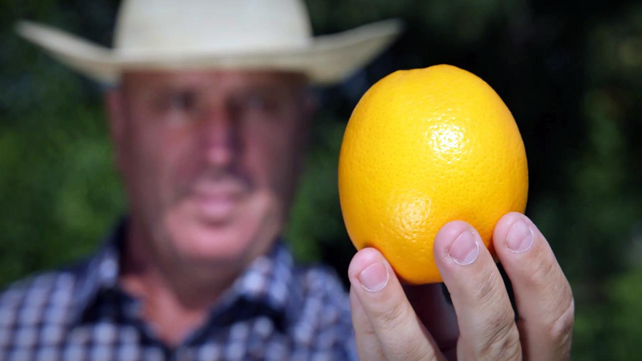 Как выбрать полезные и вкусные апельсины