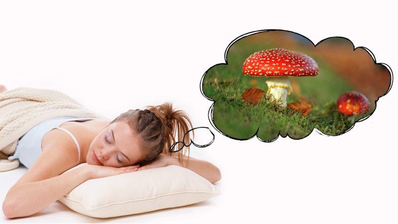 Червивые и несъедобные грибы – к чему сняться?