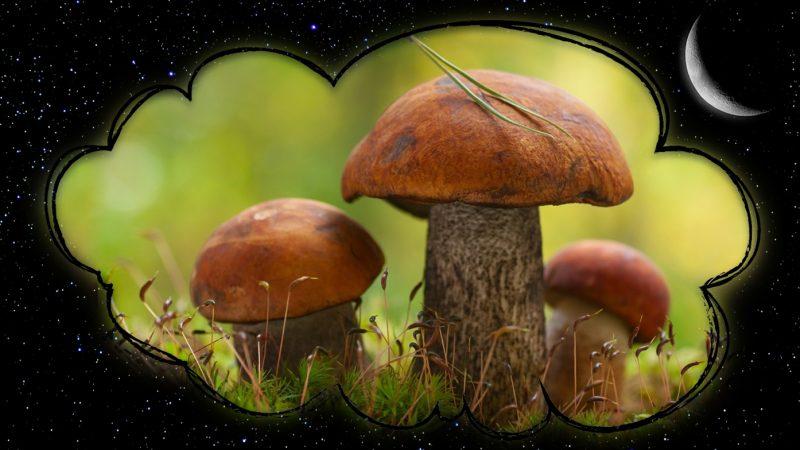 Сонник: Грибы. К чему снятся грибы?