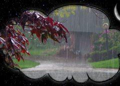 Сонник Дождь. К чему снится дождь?